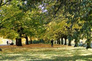 Im Herbst präsentieren sich die Londoner Parks als farbenfrohes Spiel.