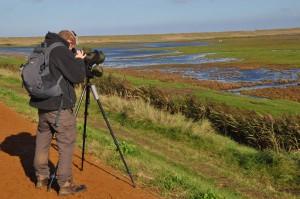 Norfolk ist ein Paradies für Birdwatcher.